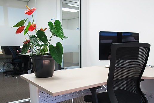 Indoor Plant Hire Brisbane