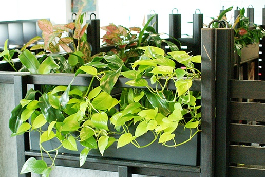 Best in Office -Indoor Plant Hire - Prestigious Plantscapes