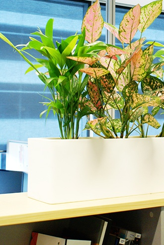 Best in Office - Office Plant Hire Services Brisbane - Prestigious Plantscapes