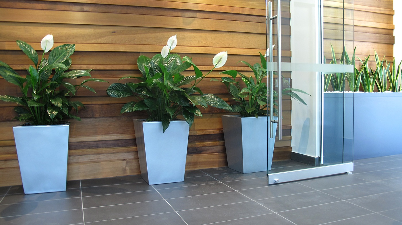 Indoor office plant gallery - Plant Hire Brisbane - Prestigious Plantscapes