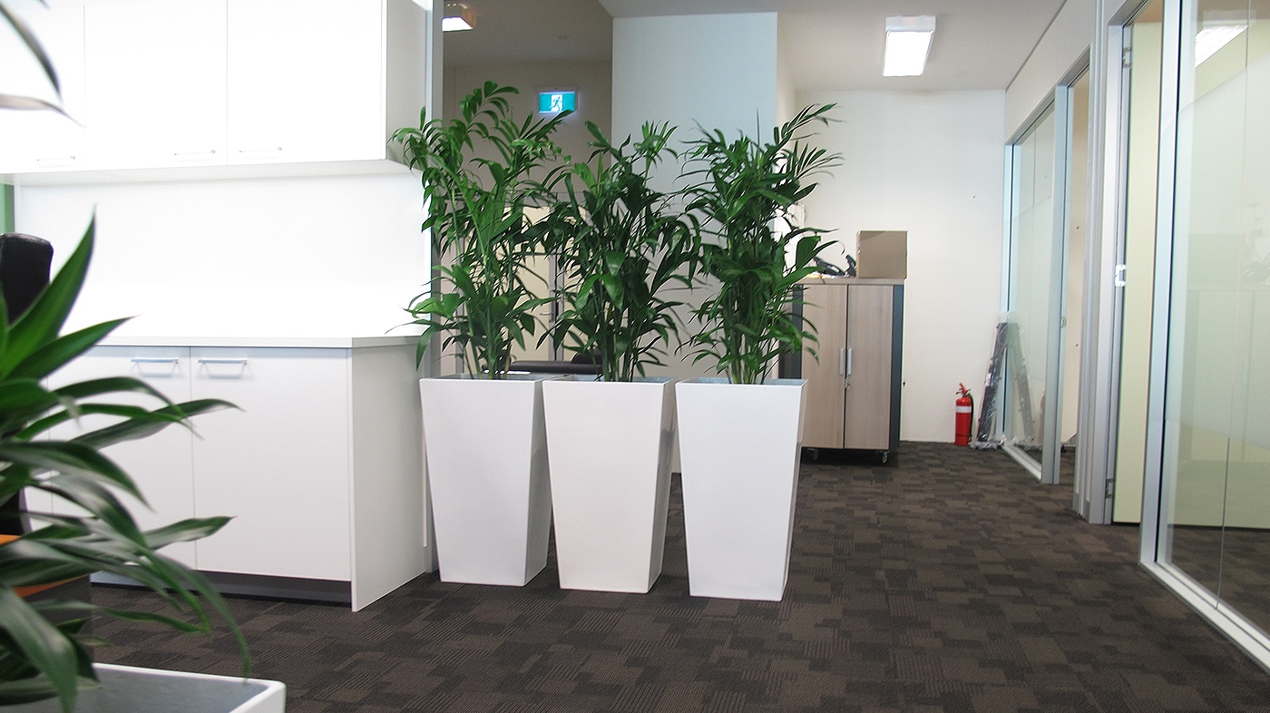 Indoor office plant gallery - Office Plants for Rent Brisbane - Prestigious Plantscapes
