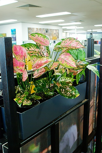 Plants Inside An Office