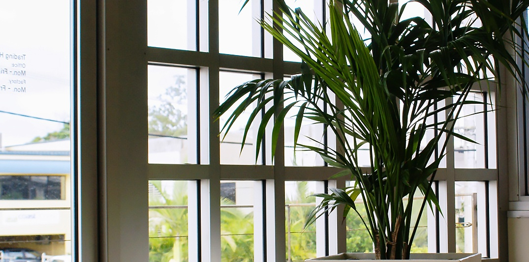 Indoor Plant Hire Brisbane - Prestigious Plantscapes