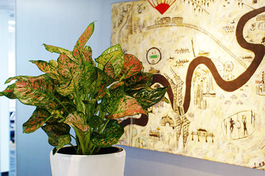 Indoor Plants Brisbane beside a painting