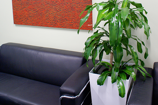 indoor plants fights sick building syndrome