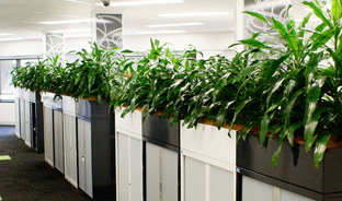 Office plant hire