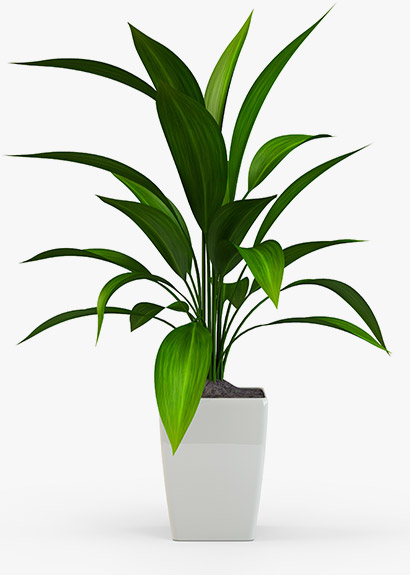 An indoor plant