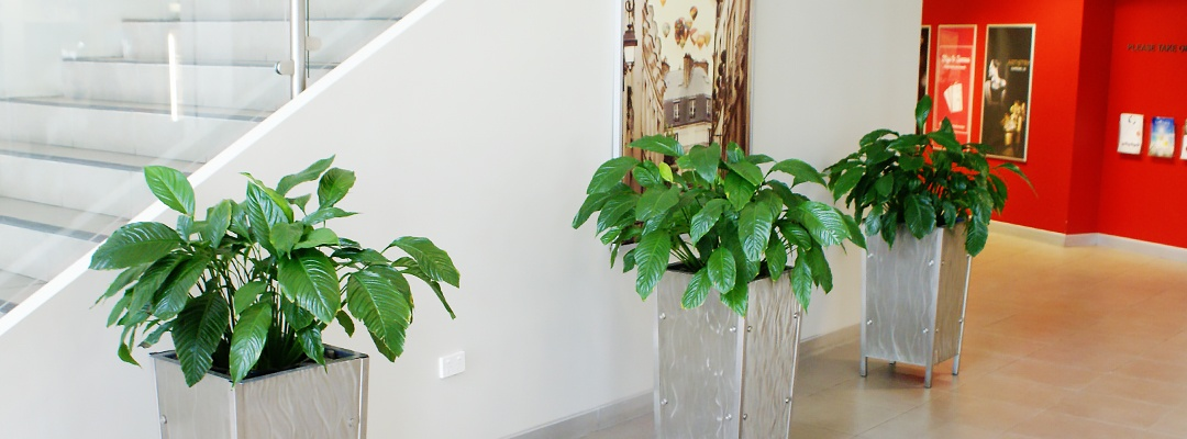 Three green plants in hallway