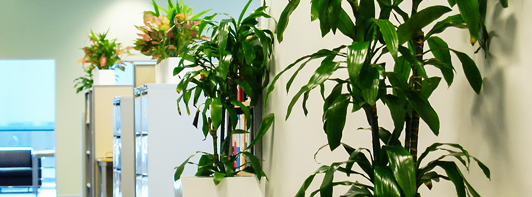 Indoor plants improve air quality