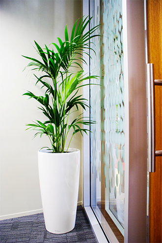 Simple green plant in white vase
