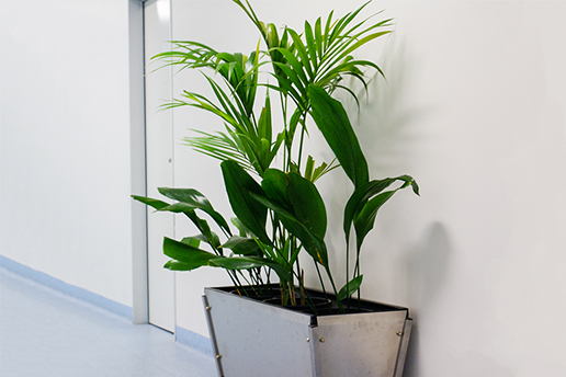 Green plant against white wall