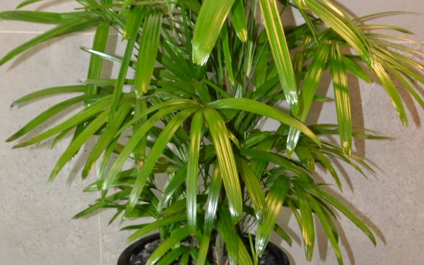 Feng Shui Your Office With Plants For Prosperity Health And Harmony Prestigious Plantscapes